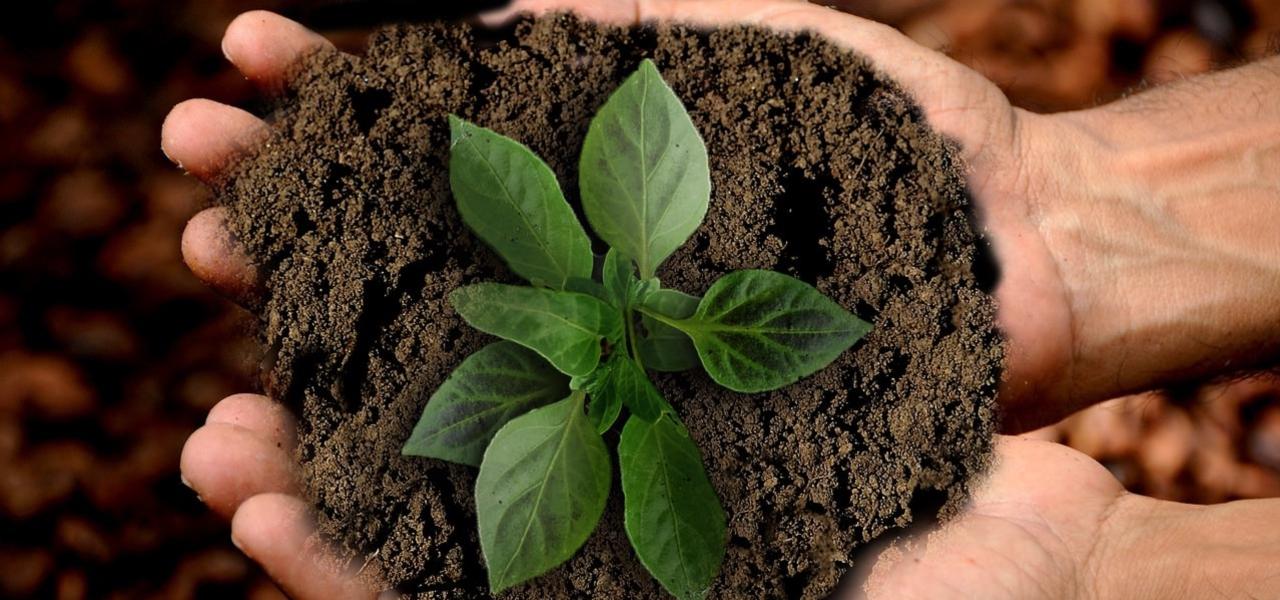 Sustainability & Green consciousness at THEOCHARIDOU & ASSOCIATES LLC